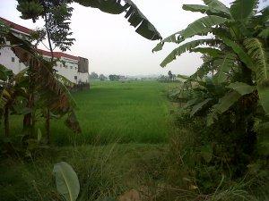 Spesifikasi : Lokasi di sekitar Jalan nasional Kadipaten - Cirebon, lebar muka 20 meter, luas tanah 2 Ha, harga Rp 750.000 per m2, cocok uintuk perumahan, kampus , dll, hub : 0812 2016 6708